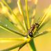 The Queen of Ants