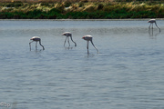 2nd Jul 2018 - Flamingos