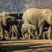Pilansberg Game Reserve by seacreature