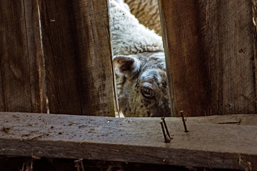Aww ..., Please Can I Come In? by farmreporter