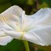 Flower Unwound!