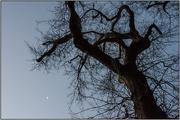 17th Jul 2018 - Tree and Moon