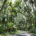 More Highlands Hammock State Park by danette