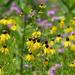 Yellow coneflowers wit magenta bergamot