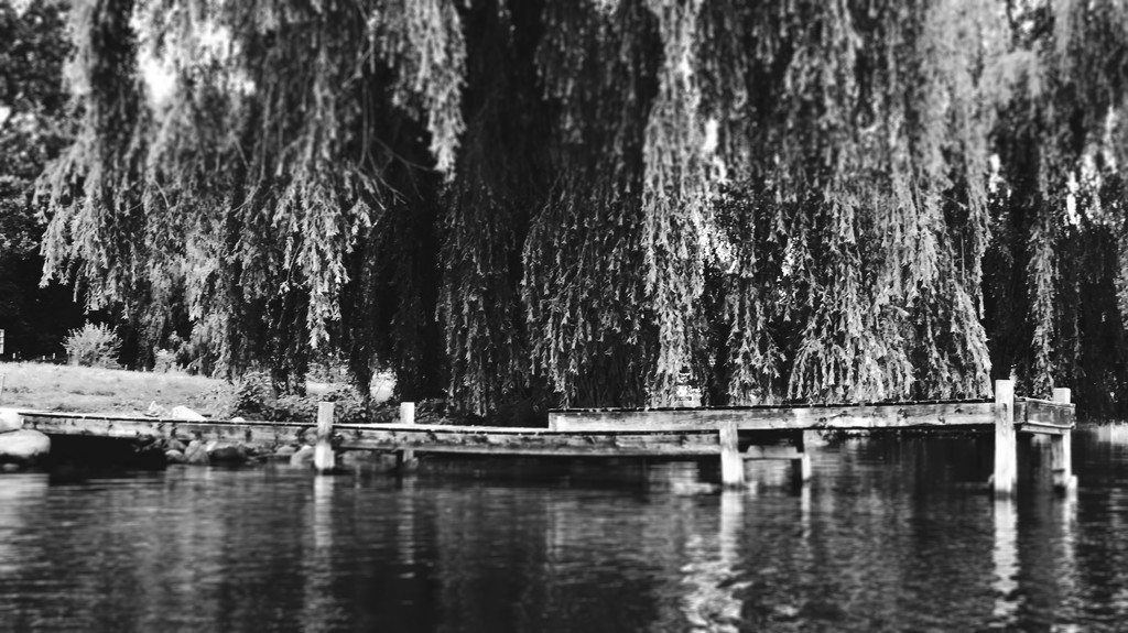 Wood dock and Willow tilt-shift by lisahans