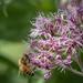 Bee In Ecstasy