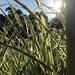 Peering through the Grasses  by beckyk365
