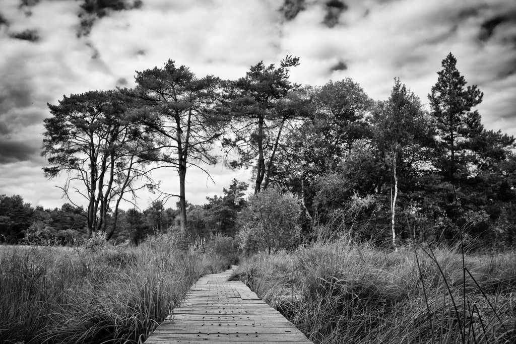 Paimpont 2018: Day 174 - Forest Walkway by vignouse
