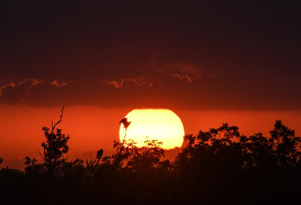 Kansas Sunset 7-18-18 by kareenking