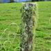 Fungi-sized Fence Post  Looks great on black background