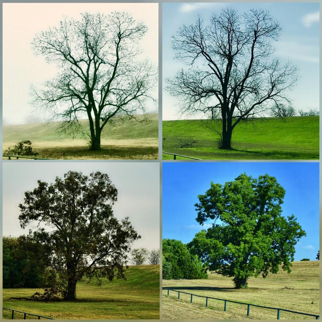 The seasons of the Post Oak by louannwarren
