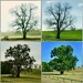 The seasons of the Post Oak