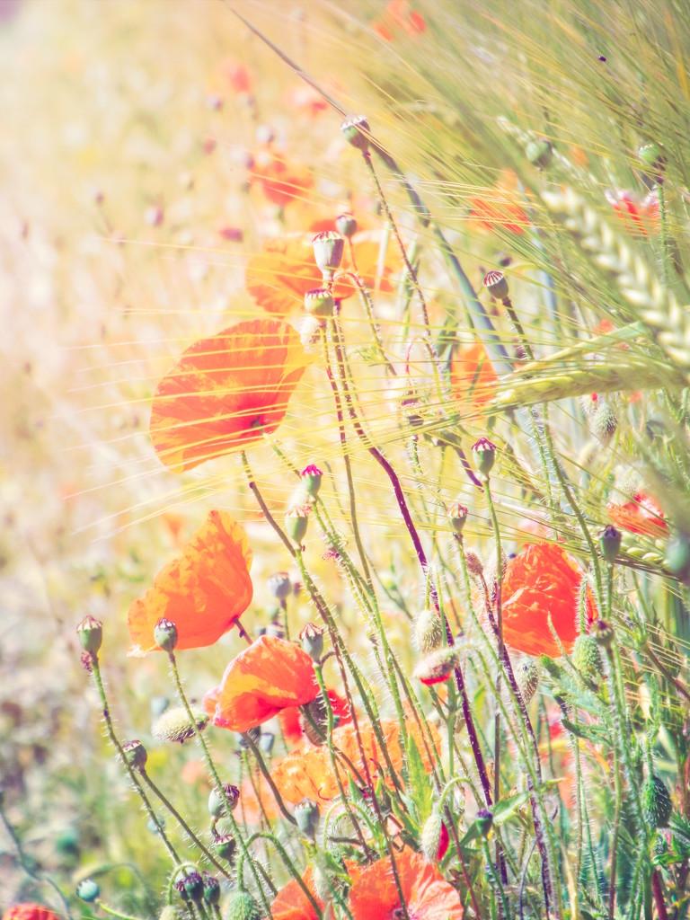 Fields edge by suzanne234