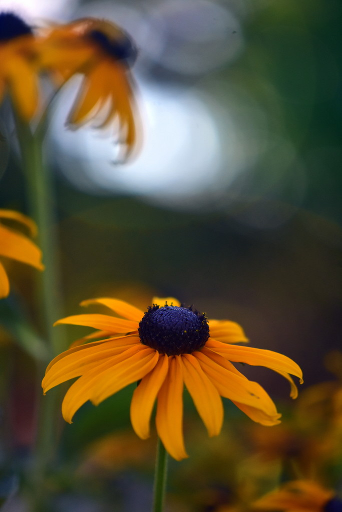 Summer evening yellow by jayberg