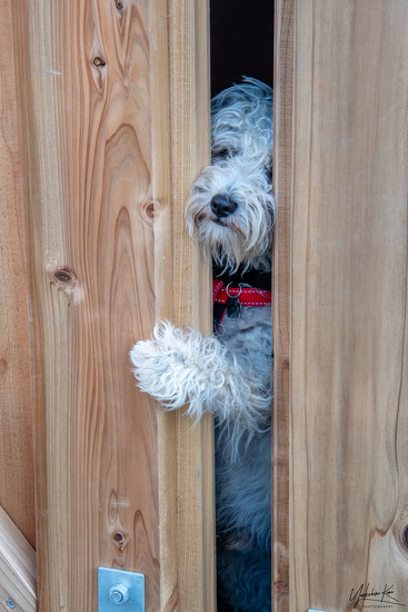 Hello, Can I come out and play? by yorkshirekiwi