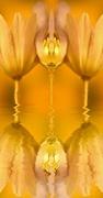 20th Jul 2018 - Golden Shimmers........