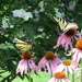 Two Butterflies Visit