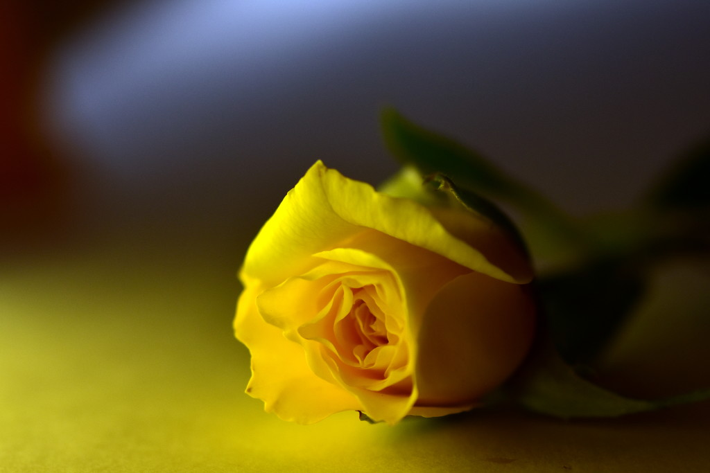 Perfection in Yellow by jayberg