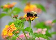 19th Jul 2018 - Bee Portrait