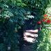 Overgrown Arbor