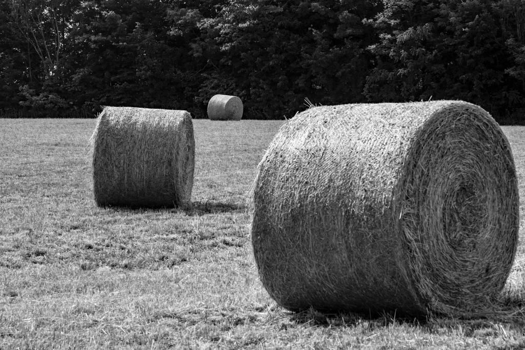 July Words - Mono Monday - Landscape by farmreporter