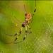 Giant Spider!