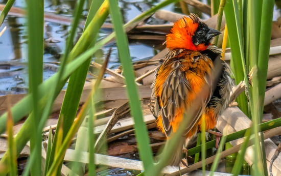 Red Bishop by ludwigsdiana