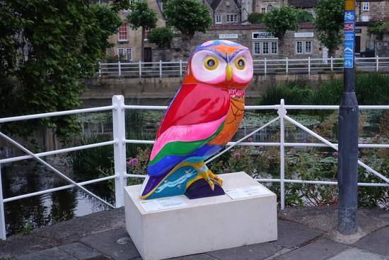Bath Owls by johnsutton