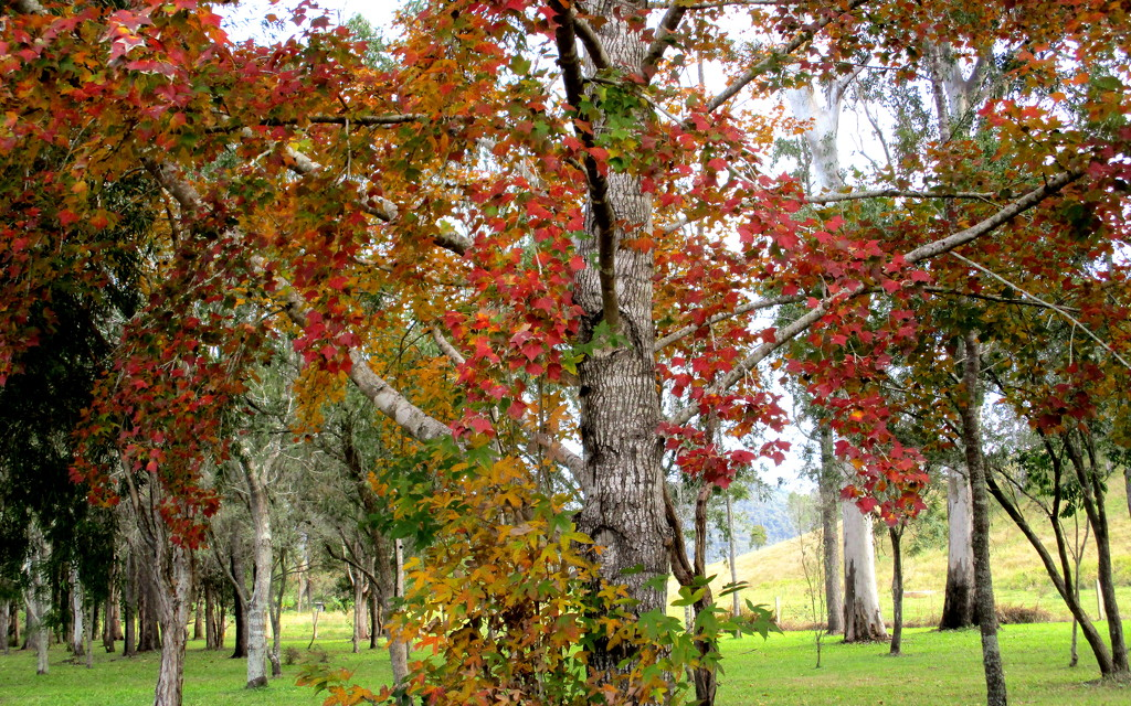 Shades of Autumn/Winter in the hinterland.  SE Queensland by 777margo