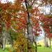 Shades of Autumn/Winter in the hinterland.  SE Queensland