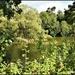 The Pond at Royal Papworth Hospital
