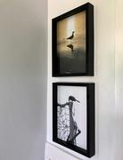 21st Jul 2018 - Birds on the wall