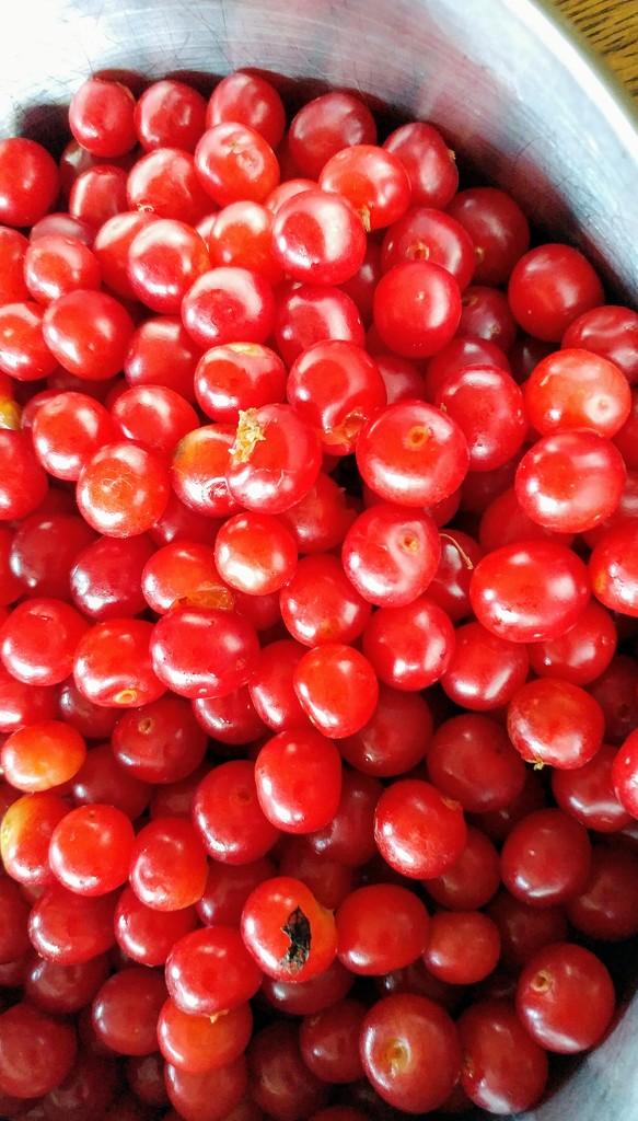 Bowl Full of Cherries by harbie