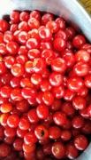 21st Jul 2018 - Bowl Full of Cherries