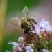 2018 07 22 - Bee
