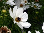 20th Jul 2018 - Busy Bee!