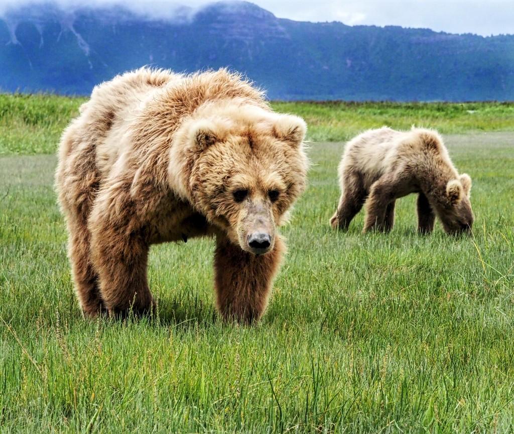 22-07 bear by tstb13