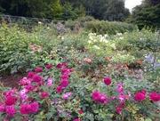 23rd Jul 2018 - Rose Gardens