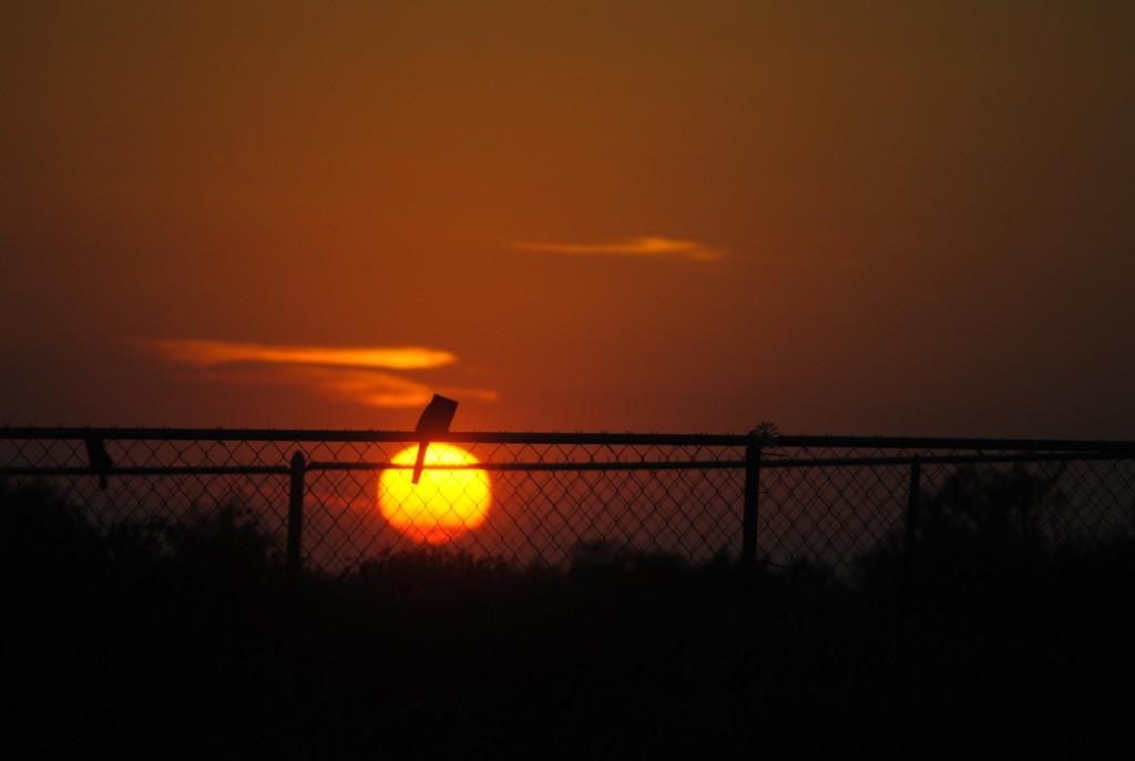 Watching the Sun Set by genealogygenie