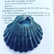 24th Jul 2018 - Black shell.