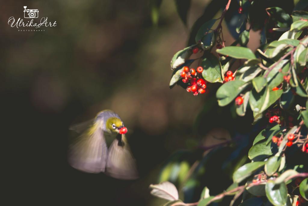 in flight by ulla