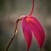 Mystery flower by maureenpp