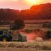 Harvest Home by shepherdman