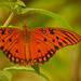 One More Gulf Fritillary Butterfly! by rickster549