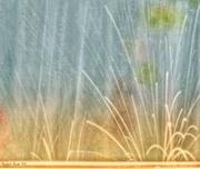 27th Jul 2018 - Raindrops