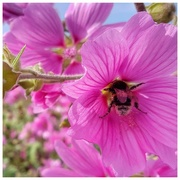 27th Jul 2018 - Don't worry - bee happy!