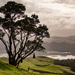 The Coromandel by yorkshirekiwi