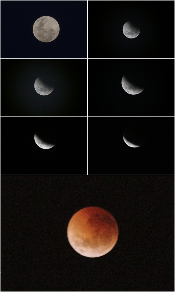 Lunar Eclipse by gilbertwood