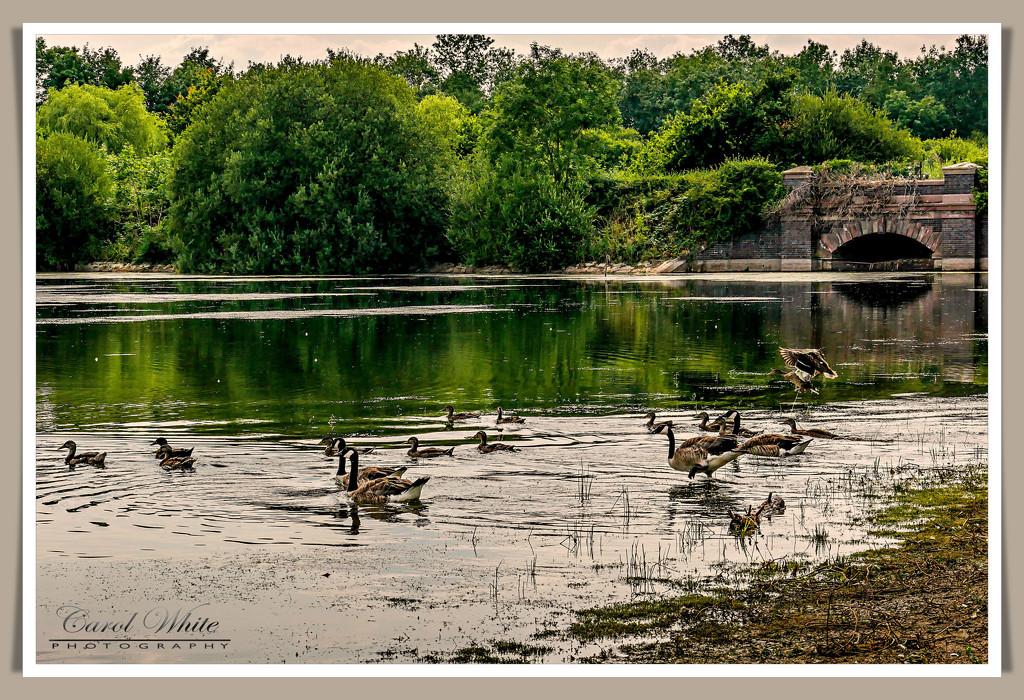 Ravensthorpe Reservoir by carolmw