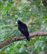 29th Jul 2018 - Inquisitive bird!
